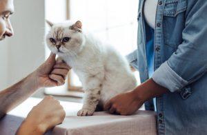 Best Veterinarian for Cats in Houston Texas