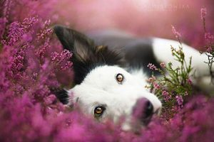 Conducting euthanasia at home is best for your pet.
