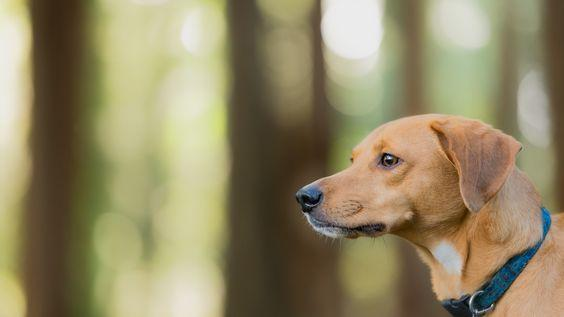 Euthanasia at home is best for your pet.