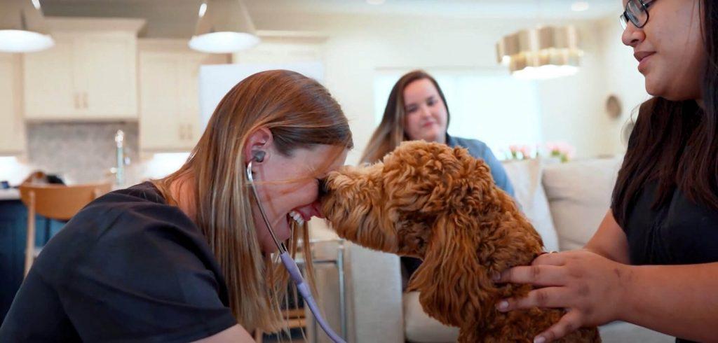 Sugar Land Texas top-rated veterinarians
